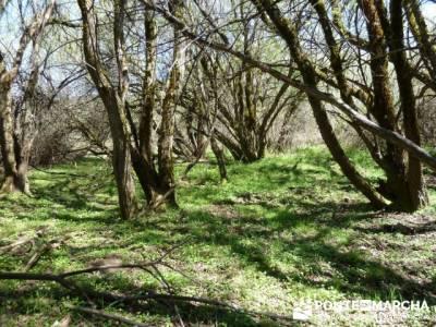 La pradera de la ermita de San Benito;senderos madrid;singles senderismo madrid